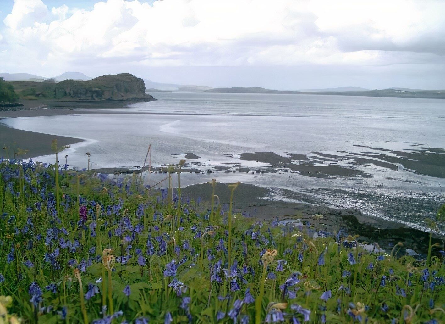 Bluebells at Fiscavaig Bay